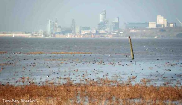 Liverpool Landscape with a rising tide