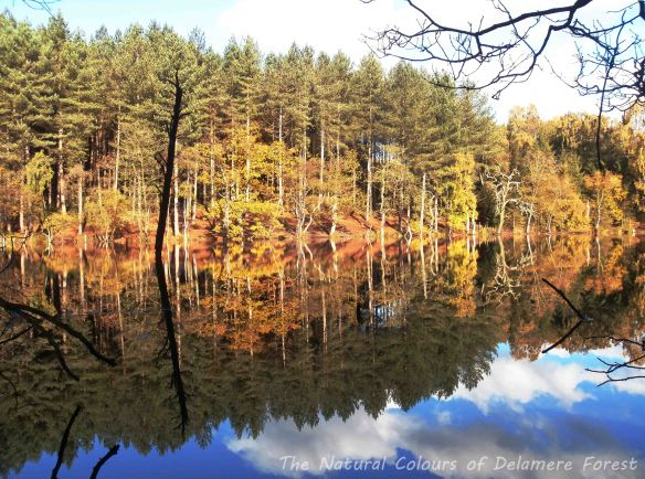 10.11.13 Autumn colours, Dead Lake, Delamere Forest. Bill Morton