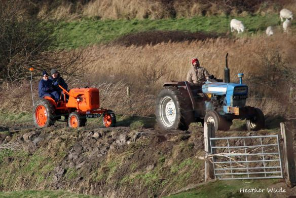 28.12.13. Tractor ralley (who's in need of a tow), Frodsham Marsh. Heather Wilde.