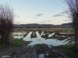 19.01.14. Puddle tracks on Frodsham Marsh. Tony Broome (1)