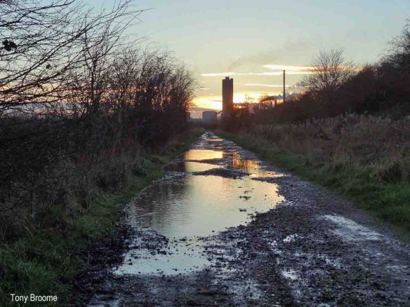 19.01.14. Puddle tracks on Frodsham Marsh. Tony Broome (2)
