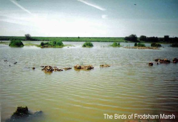 Black-winged Stilt nest site, No 6 tank, Frodsham Marsh. May-June 1993. Bill Morton.....007..