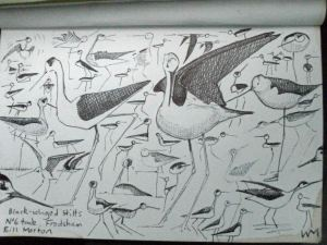 Black-winged Stilts doodle. Bill Morton