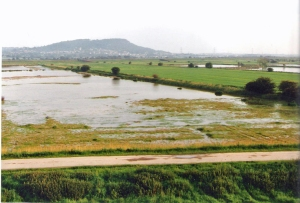 west side of the Black-winged Stilt nest site, No 6 tank, Frodsham Marsh. May-June 1993. Bill Morton.   30053 010693.