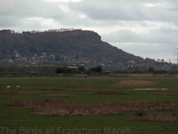 12.04.14. A view from the NE corner of No.5 tank looking toward Helsby Hill. Bill Morton