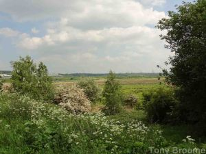 18.05.14. View looking toward the Shooters pools, Frodsham Marsh. Tony Broome