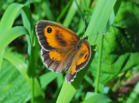 Photo 3 Gatekeeper FM Jun29th14 7806