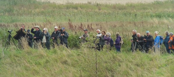 30.08.14. Wirral RSPB at Frodsham Marsh. Tony Broome.