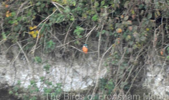 10.10.14. Kingfishers, No.6 tank. Bill Morton