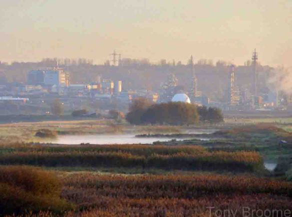 29.10.14. Sunrise over Canal Pools, frodsham Marsh, Tony Broome