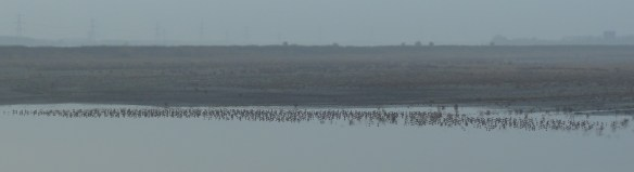 29.11.14. Waders on No.6 tank, Frodsham Marsh. Tony Broome.