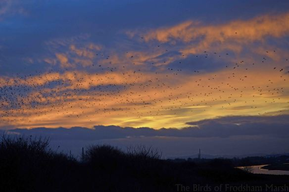13.12.14. Sunset over  No.4 tank, Frodsham Marsh. Bill Morton