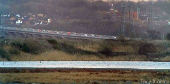 07.12.14. Motorway traffic from No.6 tank, Frodsham Marsh Marsh. Tony Broome