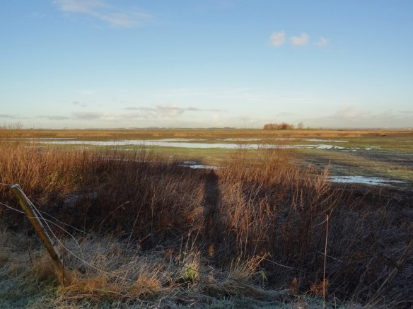 13.12.14. No.3 tank, Frodsham Marsh. Tony Broome