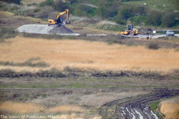 16.04.15. North-east corner No.4 tank, Frodsham Marsh, remaining reed bed and clear scrub. Bill Morton (12)