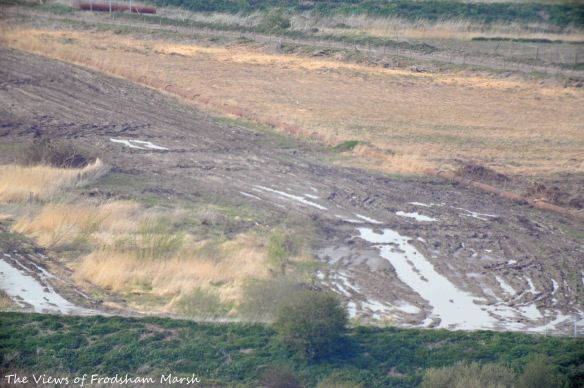 16.04.15. South-east corner of No.4 tank, Frodsham Marsh, remaining reed bed and clear scrub in foreground. Bill Morton (2)