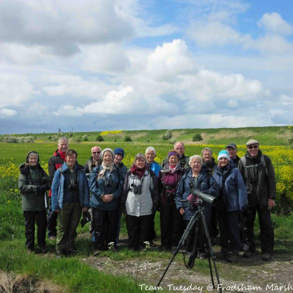 19.05.15. Team Tuesday Birders do Frodsham Marsh. Bill Morton