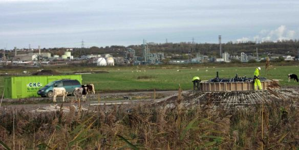 14.11.15. (Wind turbine base setting, No.5 tank, Frodsham Marsh. Bill Morton (2)