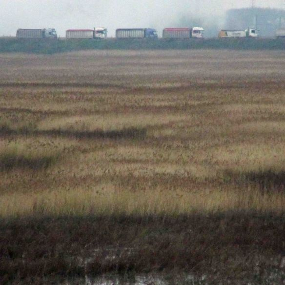 05.01.16. Trucks, No.6 tank, Frodsham Marsh. Bill Morton