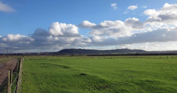 30.01.16. A view of Frodsham Hill from Marsh Farm, Frodsham Marsh. Bill Morton