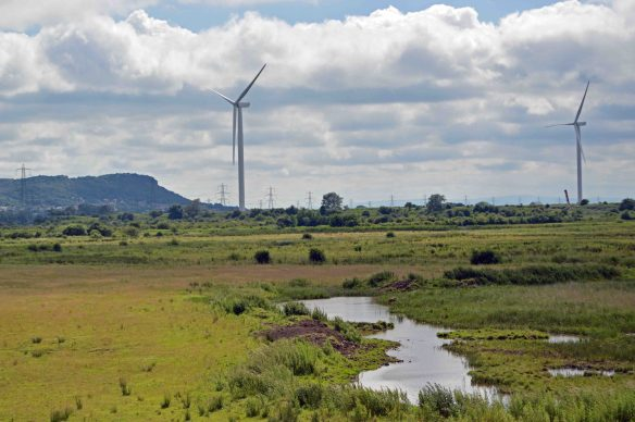 25.06.16. Wind Turbines as viewed from the I.C.I tank, Frodsham Marsh. Bill Morton (4)
