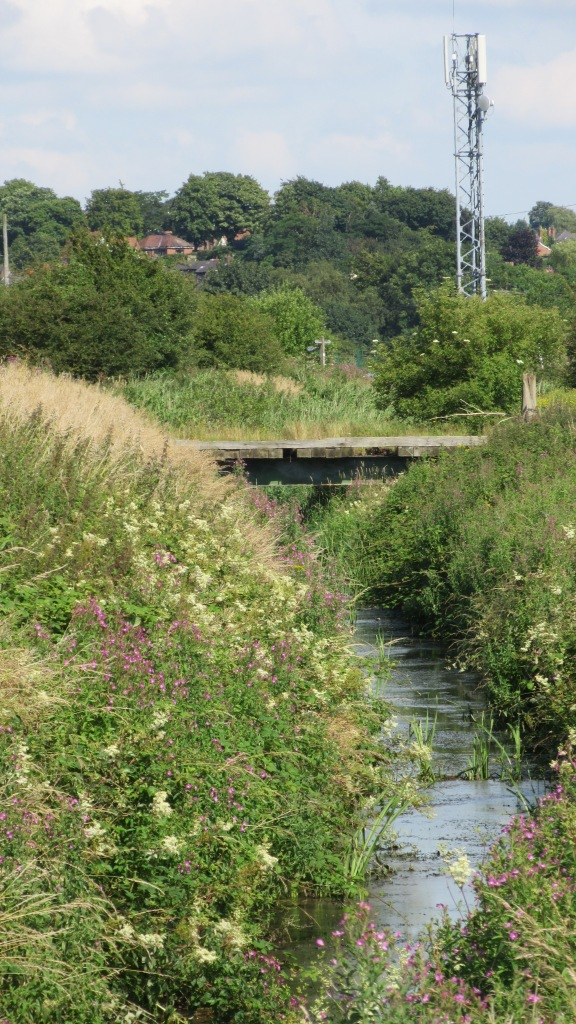 17.07.16. Ditch along Moorditch Lane, Frodsham Marsh. Bill Morton (2)