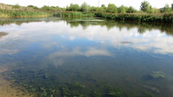 05.09.16. Secluded pool, No.6 tank, Frodsham Marsh. Bill Morton (17)