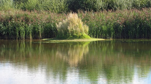 05.09.16. Secluded pool, No.6 tank, Frodsham Marsh. Bill Morton (19)
