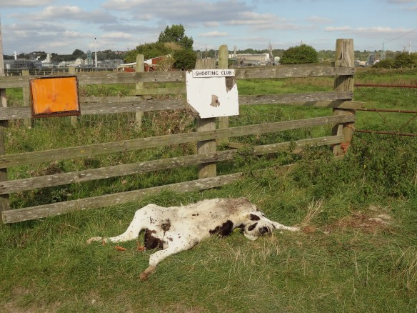 18-09-16-dead-calf-marsh-farm-frodsham-marsh-tony-broome-1