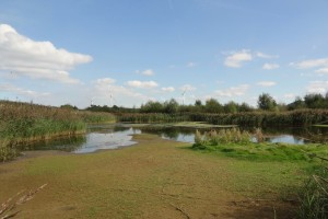 18-09-16-secluded-poolfrodsham-marsh-tony-broome-2
