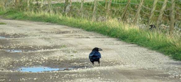 22-09-16-raven-no-1-tank-frodsham-marsh-bill-morton-2
