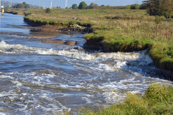 15-10-16-water-wave-wash-from-the-cemsol-ship-passing-along-the-manchester-ship-canal-frodsham-marsh-bill-morton-12