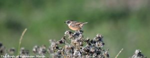 22-09-15-stonechat-no-1-tank-frodsham-marsh-bill-morton-9