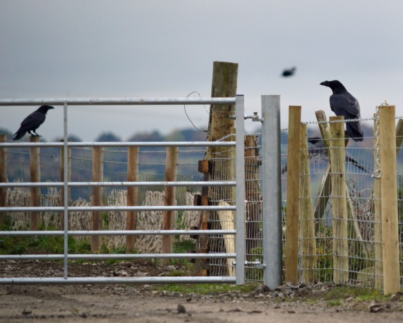 29-10-16-raven-no-2-tank-frodsham-marsh-bill-morton-2
