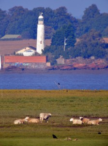 15.10.16. Hale lighthouse from Frodsham Score, Frodsham Marsh. Bill Morton