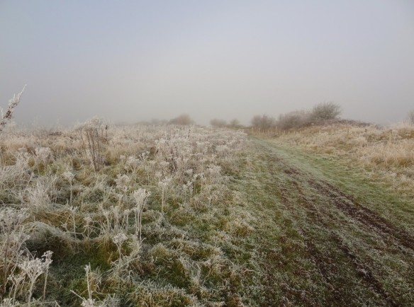 26-11-16-frosty-frodsham-marsh-tony-broome-4