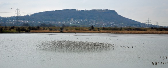 11-02-17-dunlin-flock-no-6-tank-frodsham-marsh-bill-morton-3
