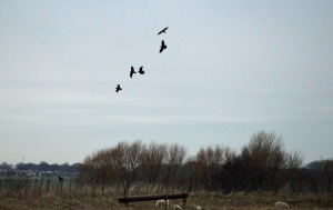 16-02-17-ravens-no-5-tank-frodsham-marsh-bill-morton