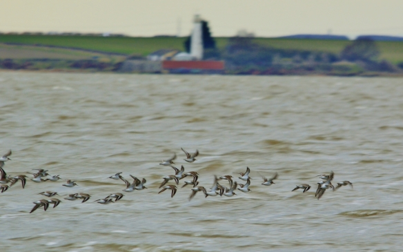 february-2017-waders-and-hale-lighthouse-shaun-hickey
