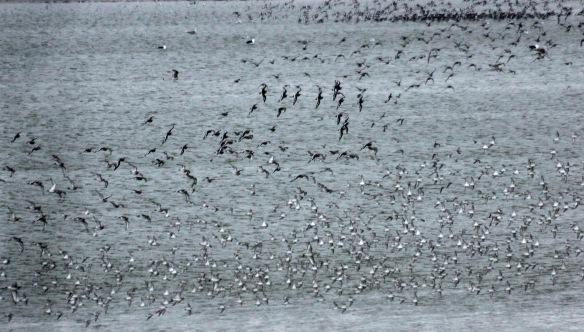 23-02-17-waders-no-6-tank-frodsham-marsh-paul-ralston-1