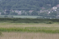 10.06.17. Marsh Harriers, Frodsham Marsh. Paul Ralston (1)
