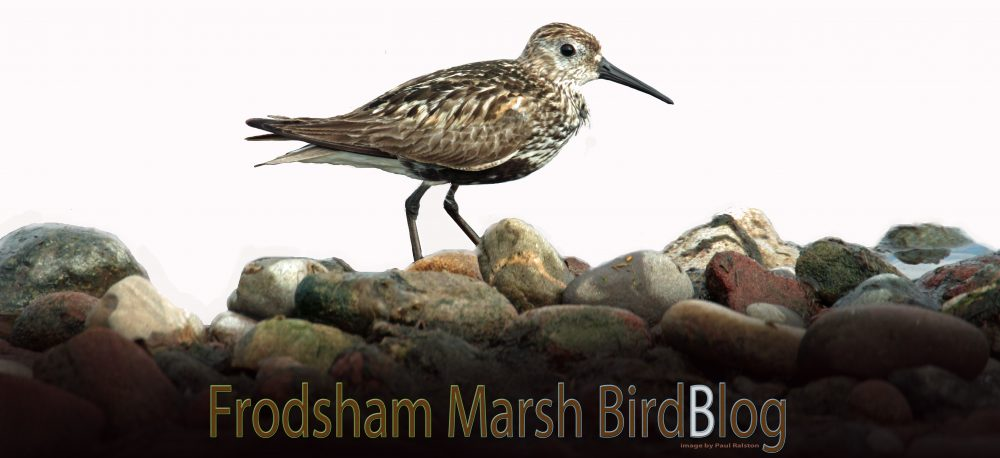 Frodsham Marsh Bird Blog